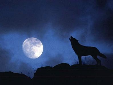 · Lobo ·